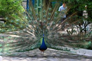 Vườn chim thú thiên nhiên