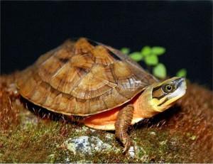 Bộ rùa