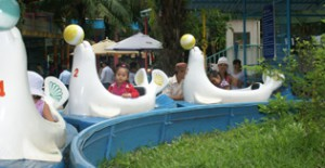 Hải cẩu vượt thác